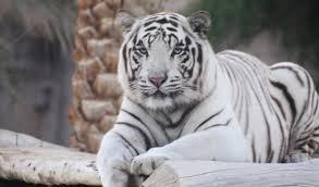 Guwahati Zoo