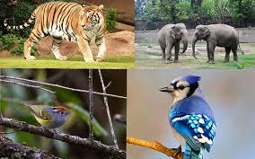 Fambong La Wildlife Sanctuary